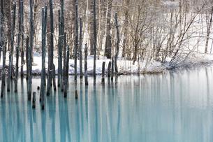 雪が残る春の青い池 美瑛町の写真素材 [FYI04795179]