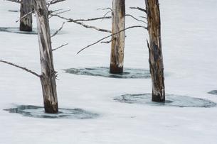 雪が残る春の青い池 美瑛町の写真素材 [FYI04795183]