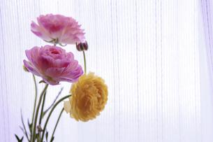 窓辺に飾られた花の写真素材 [FYI04795506]