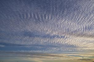 都会の空に広がるイワシ雲の写真素材 [FYI04795525]