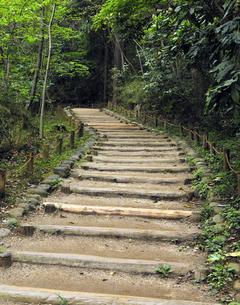 公園の森の登り道の写真素材 [FYI04795565]