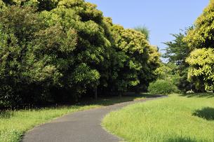 五月の公園の散策路の写真素材 [FYI04795566]