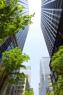新緑の丸の内の高層ビル群の写真素材 [FYI04795567]
