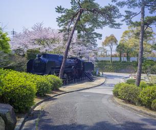 山口県 風景 桜 常盤公園の写真素材 [FYI04795695]