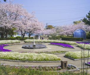 山口県 風景 桜 常盤公園の写真素材 [FYI04795705]