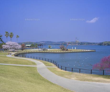 山口県 風景 桜 常盤公園の写真素材 [FYI04795710]