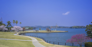 山口県 風景 桜 常盤公園の写真素材 [FYI04795711]