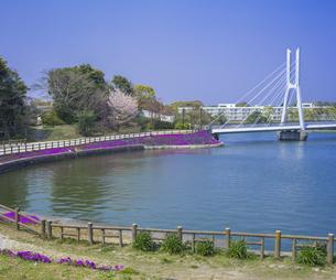 山口県 風景 桜 常盤公園の写真素材 [FYI04795719]