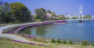 山口県 風景 桜 常盤公園の写真素材 [FYI04795720]