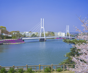山口県 風景 桜 常盤公園の写真素材 [FYI04795721]