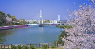 山口県 風景 桜 常盤公園の写真素材 [FYI04795722]