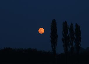 満月と木立の写真素材 [FYI04795807]