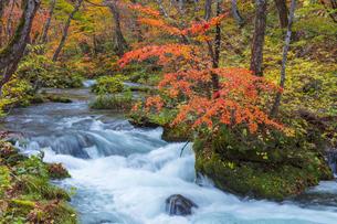 奥入瀬渓流の紅葉の写真素材 [FYI04795818]