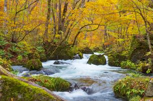 奥入瀬渓流の紅葉の写真素材 [FYI04795826]