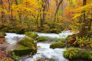 奥入瀬渓流の紅葉の写真素材 [FYI04795830]