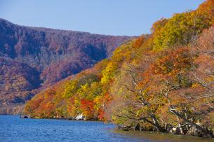 十和田湖畔の紅葉の写真素材 [FYI04795847]