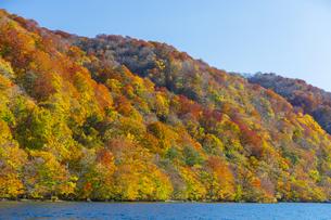 十和田湖畔の紅葉の写真素材 [FYI04795848]