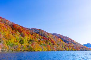 十和田湖畔の紅葉の写真素材 [FYI04795849]