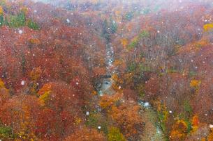 城ヶ倉大橋から見る八甲田山麓の紅葉と雪の写真素材 [FYI04795853]