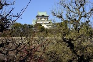 大阪城梅林,梅の花と大阪城天守閣の写真素材 [FYI04795921]