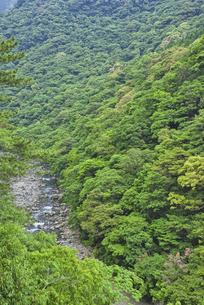 照葉樹林の森の写真素材 [FYI04795957]