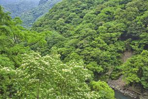 照葉樹林の森の写真素材 [FYI04795958]