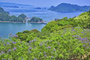 ジャカランダ咲く日南海岸の写真素材 [FYI04795960]