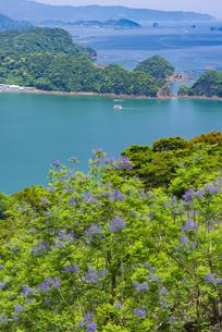 ジャカランダ咲く日南海岸の写真素材 [FYI04795961]
