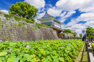 御楼門と鶴丸城跡の写真素材 [FYI04795969]