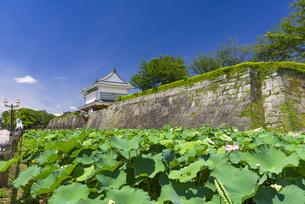 御楼門と鶴丸城跡の写真素材 [FYI04795973]