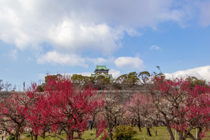 梅の花に囲まれた大阪城の写真素材 [FYI04796157]