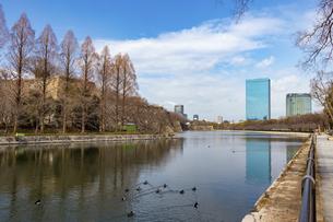 大阪城外堀と水鳥の群れの写真素材 [FYI04796164]