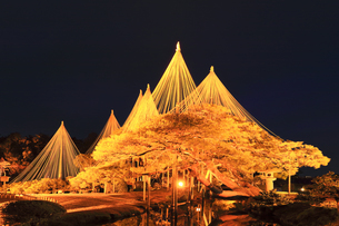 北陸金沢 兼六園のライトアップ冬の段の写真素材 [FYI04796591]