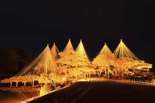 北陸金沢 兼六園の唐崎松ライトアップ冬の段の写真素材 [FYI04796593]