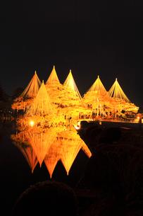 北陸金沢 兼六園の唐崎松ライトアップ冬の段の写真素材 [FYI04796595]