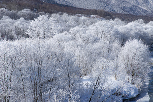 北海道冬の風景 富良野の樹氷の写真素材 [FYI04796817]
