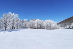 北海道冬の風景 富良野の樹氷の写真素材 [FYI04796818]