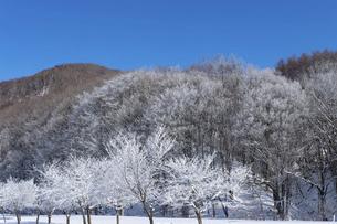 北海道冬の風景 富良野の樹氷の写真素材 [FYI04796819]
