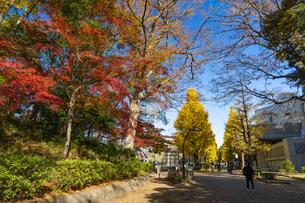 東京都 紅葉する上野公園の写真素材 [FYI04797228]