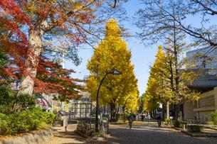 東京都 紅葉する上野公園の写真素材 [FYI04797229]