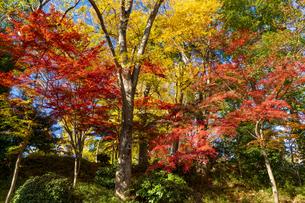 東京都 紅葉する上野公園の写真素材 [FYI04797230]