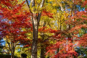 東京都 紅葉する上野公園の写真素材 [FYI04797231]
