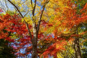 東京都 紅葉する上野公園の写真素材 [FYI04797232]