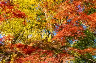 東京都 紅葉する上野公園の写真素材 [FYI04797234]