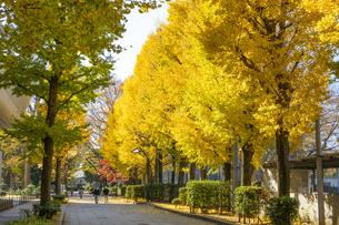 東京都 紅葉する上野公園の写真素材 [FYI04797241]