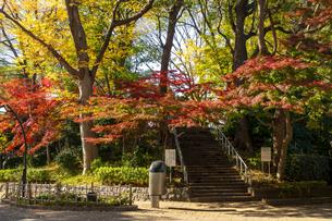 東京都 紅葉する上野公園の写真素材 [FYI04797245]