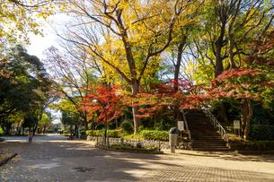 東京都 紅葉する上野公園の写真素材 [FYI04797246]