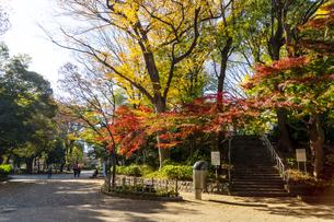 東京都 紅葉する上野公園の写真素材 [FYI04797247]