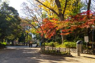 東京都 紅葉する上野公園の写真素材 [FYI04797248]