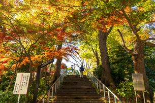 東京都 紅葉する上野公園の写真素材 [FYI04797250]